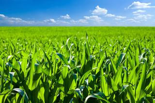 Onze agrocoaches bieden praktische hulp aan boeren (en boerengezinnen bij familiebedrijven), agrariers, melkveehouders, varkenshouders en landbouwers