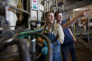 Onze onafhankelijke agrocoaches begeleiden agrarisch ondernemers in de varkenshouderij en de melkveehouderij op het gebied van bedrijfsontwikkeling, samenwerking en bedrijfsovername
