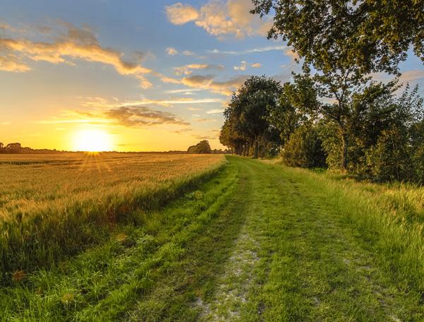 Agrocoaching helpt boeren en agrarisch ondernemers bij klachten zoals een burn-out, depressie, overspannen zijn, relatieproblemen, stoppen met het boerenbedrijf, loopbaancoaching etc.