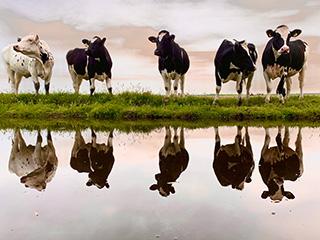 Hogenkamp Agrarische Coaching: agricoaching, mediation, loopbaancoaching, psychische hulp en trainingen.