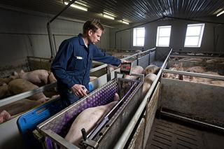 Boer in varkensbedrijf - de verbinding tussen gezin, werk en eigendom is nergens zo verweven als in de agrarische sector